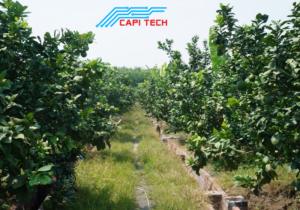 chống-trộm-vườn-cây-ăn-quả-2